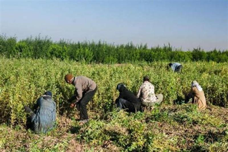 تخصیص ۷۳۰۰ میلیارد تومان اعتبار جدید برای تسهیلات اشتغال روستایی