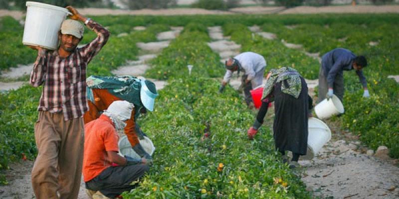 آشنایی با مشاغل کشاورزی