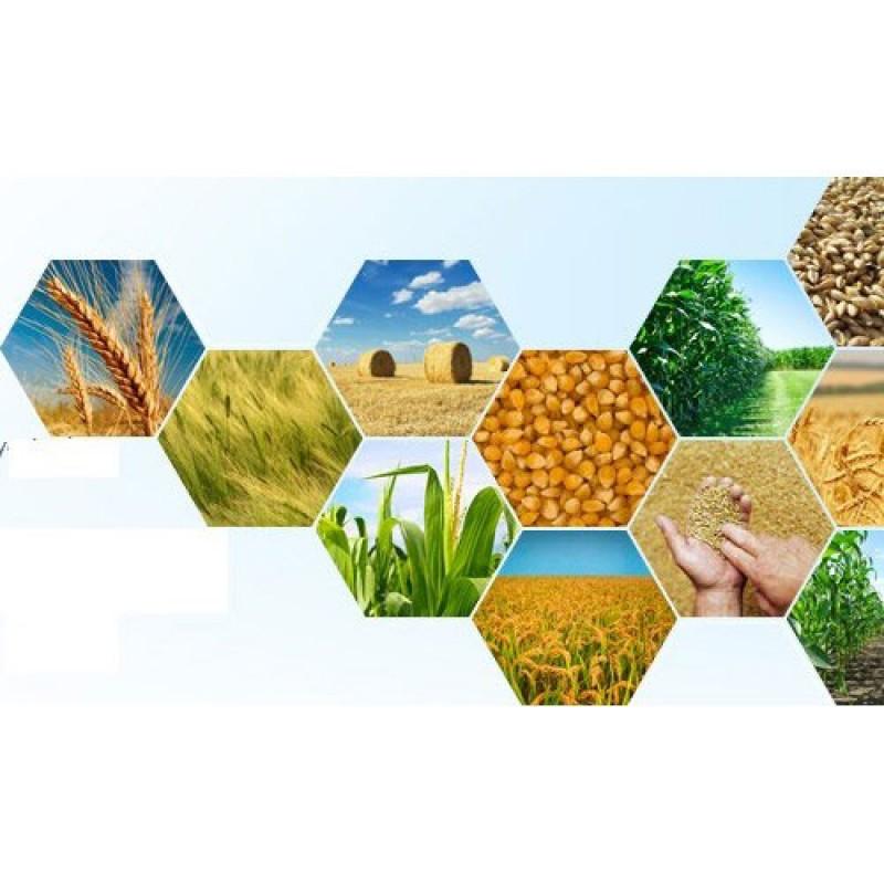 پرداخت ۷۰۱ میلیارد ریال تسهیلات اشتغال روستایی و عشایری