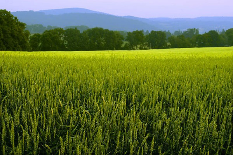 ۱۲۶ میلیارد تومان تسهیلات به متقاضیان بخش کشاورزی قزوین پرداخت شد