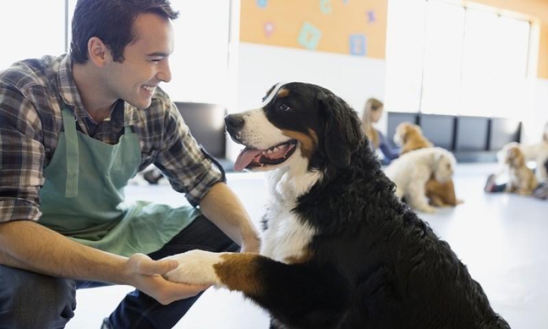 آشنایی با مشاغل خدمات حیوانات